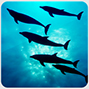 Deep Ocean 3D Free game review